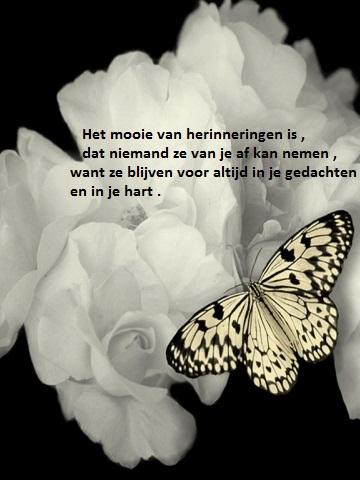 Super Beri.nl - Surinaamse Familieberichten - condoleances Helen Schet LB-31